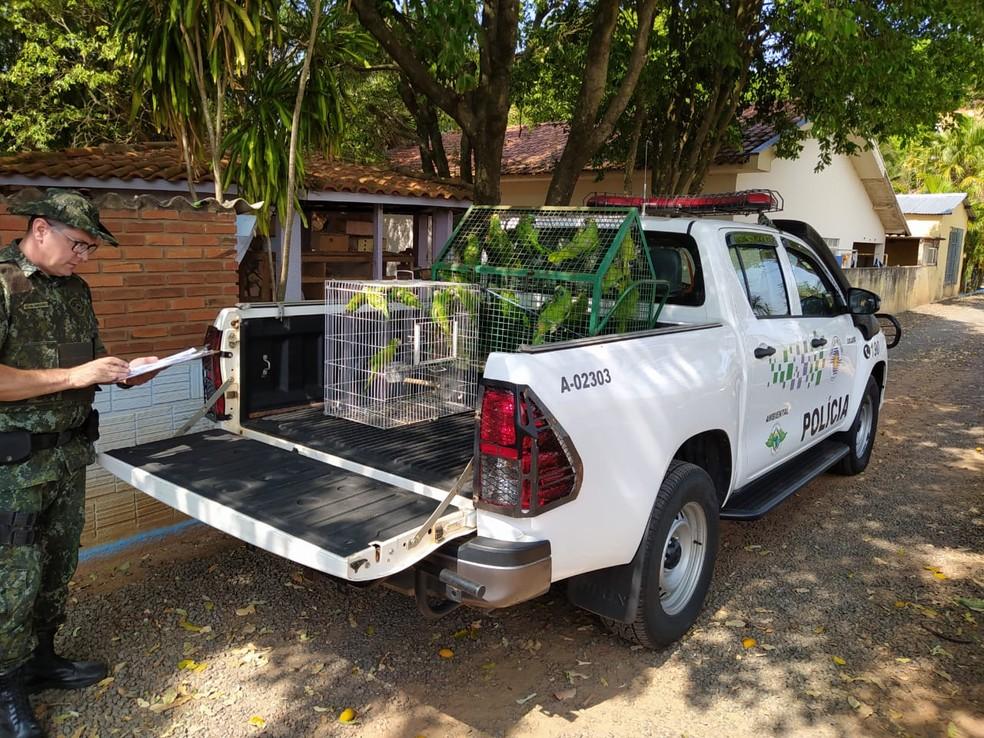Aves silvestres também foram entregues voluntariamente à Polícia Militar Ambiental — Foto: Polícia Militar Ambiental
