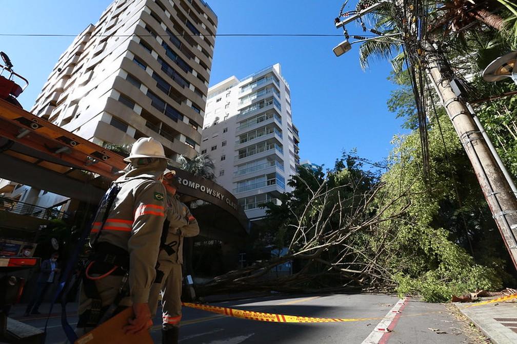 Passagem de ciclone provocou queda de árvore em Florianópolis; trabalhos dos bombeiros são realizados em meio à ventania — Foto: Julio Cavalheiro/ Secom