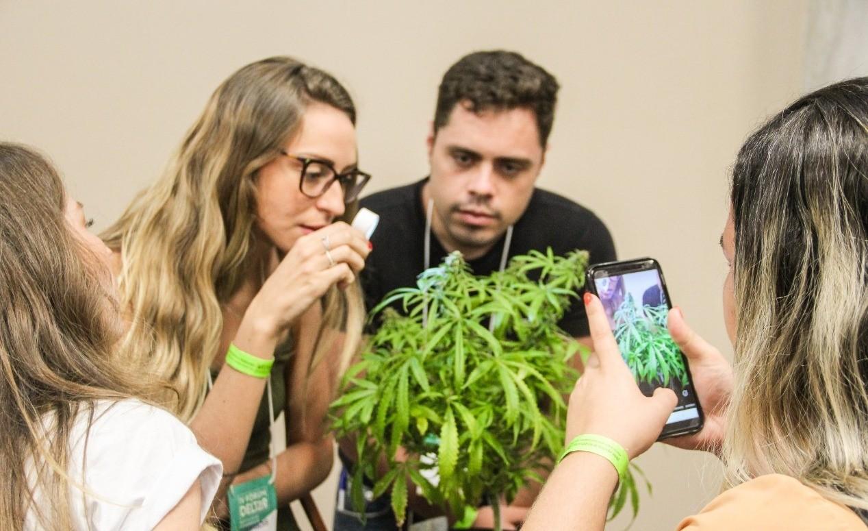 Uso medicinal da cannabis para tratamento de sequelas da Covid-19 é tema de fórum online