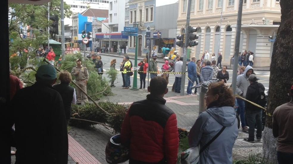 Mulher é atingida por árvore no Centro de Curitiba (Foto: Elaine Mendez)