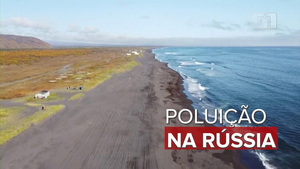 Cadáveres de animais marinhos são encontrados em praias do leste da Rússia