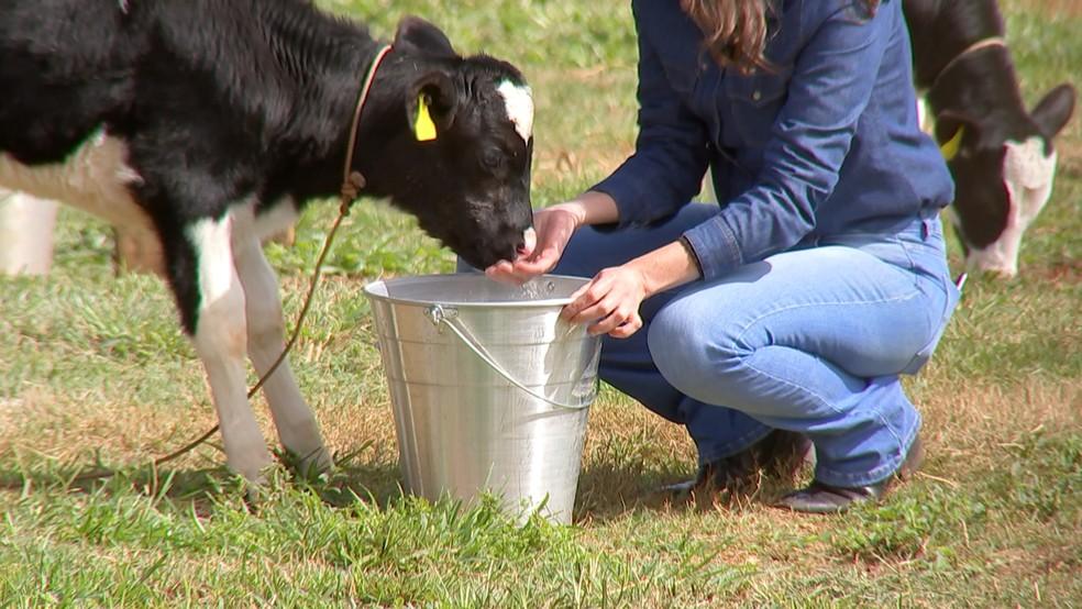 Pecuarista não pode se descuidar da qualidade da água dos animais — Foto: Reprodução/TV TEM