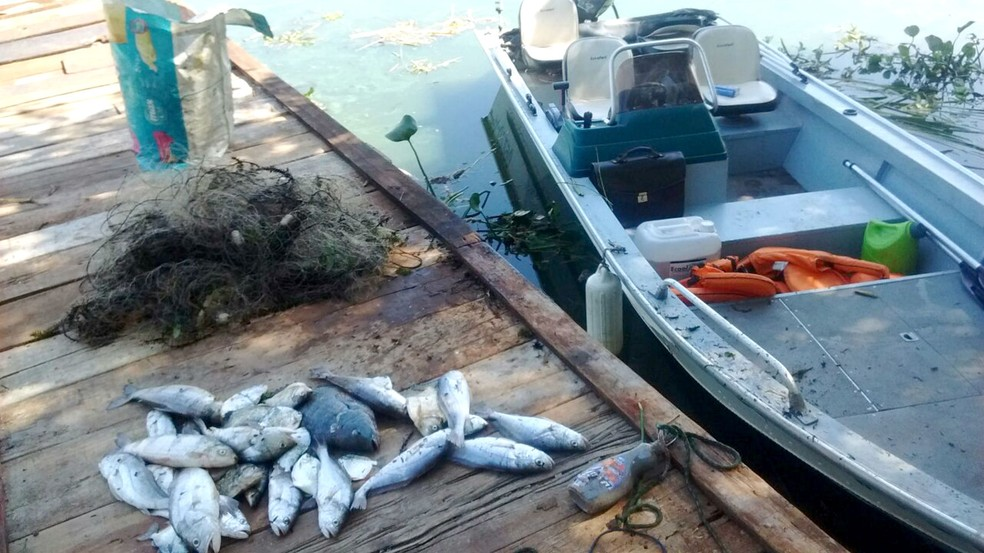 Apesar do aumento no número e no valor das autuações, o total de peixes apreendidos teve redução (Foto: Polícia Ambiental/Divulgação)