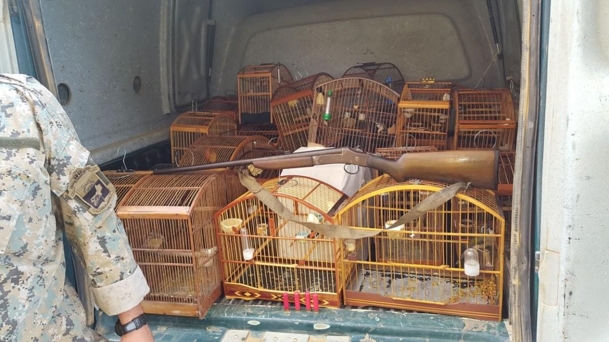 Polícia Ambiental apreende pássaros silvestres que estavam em cativeiro em Macaé, no RJ