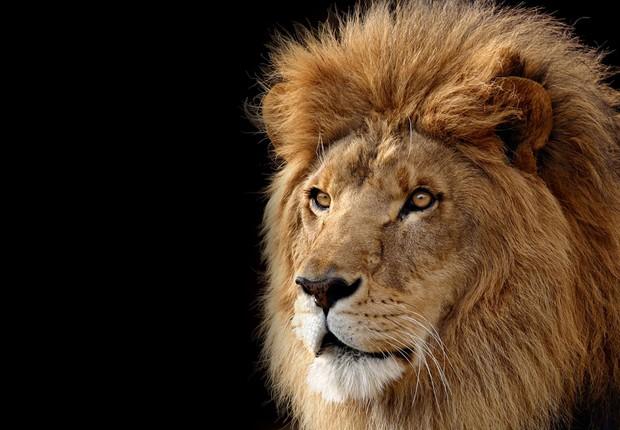 Imposto de Renda ; leão ; IR ;  (Foto: Reprodução/Facebook)