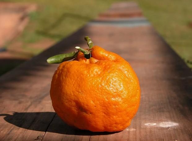 A mexerica tem diversos nomes pelo Brasil, como tangerina, mimosa e bergamota (Foto: Pixabay/SamaraPacheco0/CreativeCommons)