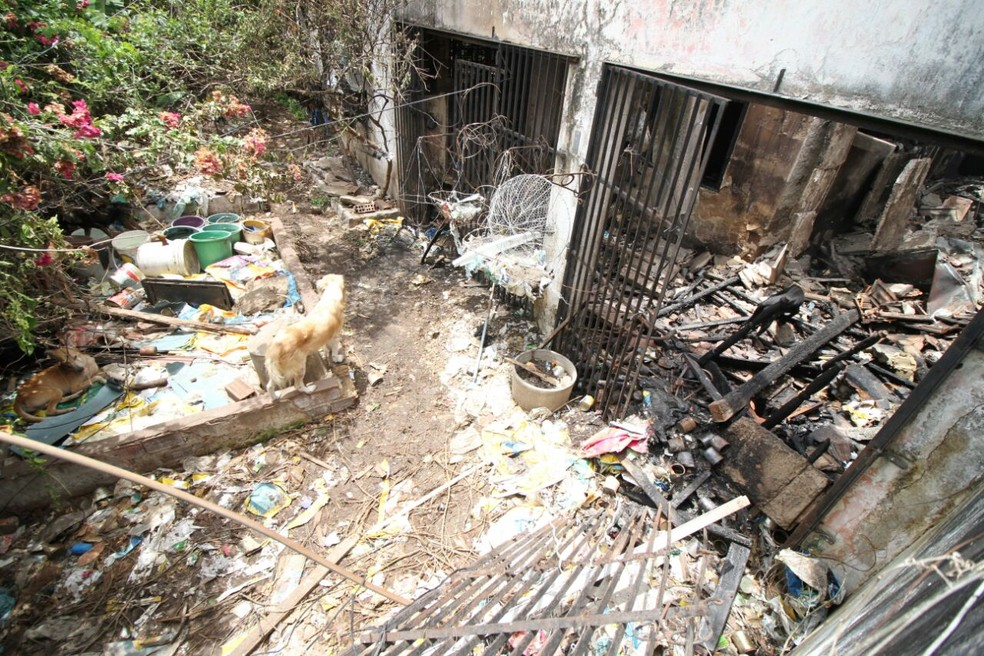 Incêndio atingiu todos os cômodos da casa e derrubou a laje, mas cachorros não se feriram (Foto: Marlon Costa/Pernambuco Press)