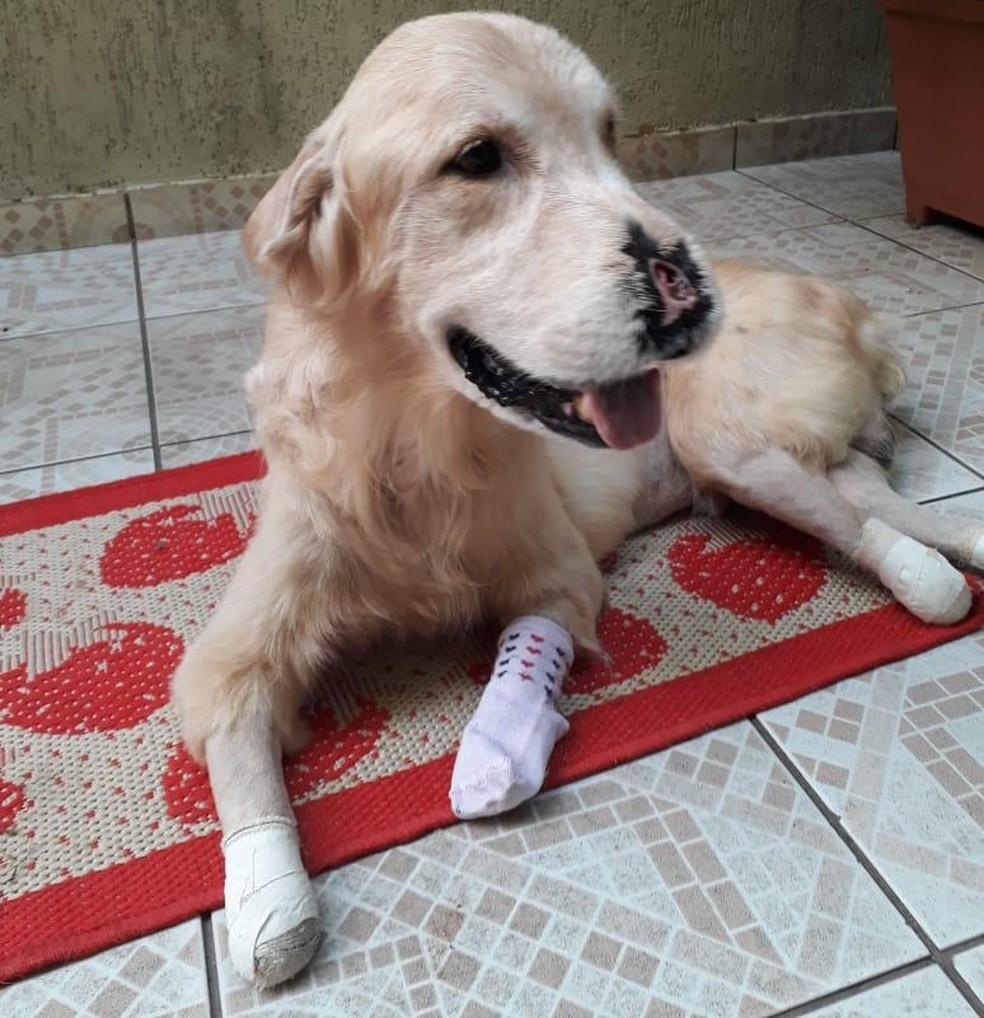 Câncer causou necrose nas patas do cão Max  — Foto: Arquivo pessoal