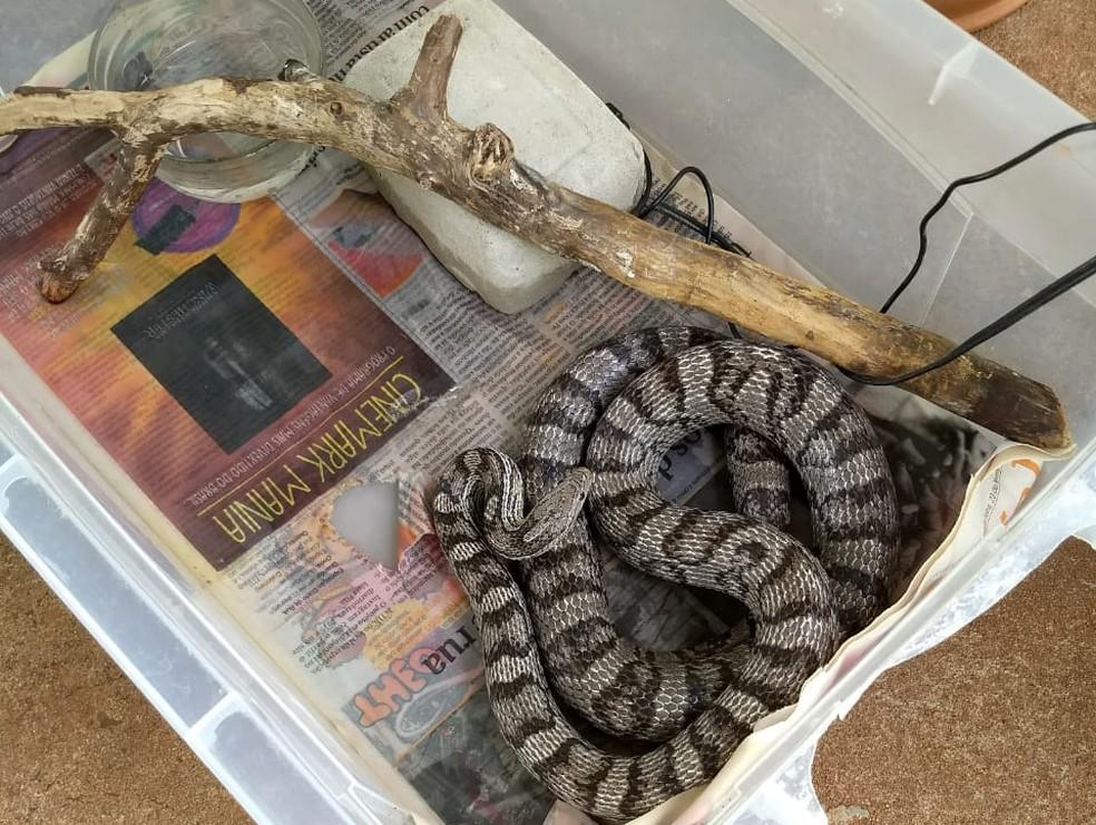 Uma das cobras estava solta dentro do guarda-roupas e outra dentro de caixa, embaixo da cama (Foto: PM-PR/Divulgação)