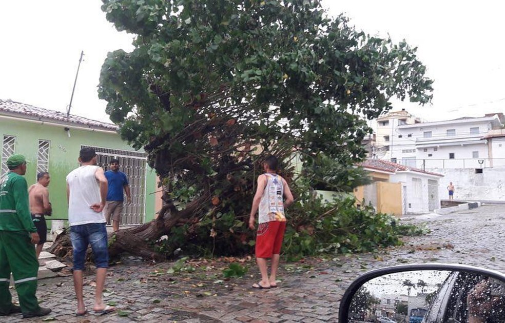 Árvore tombou no meio de uma rua em Currais Novos — Foto: Redes sociais
