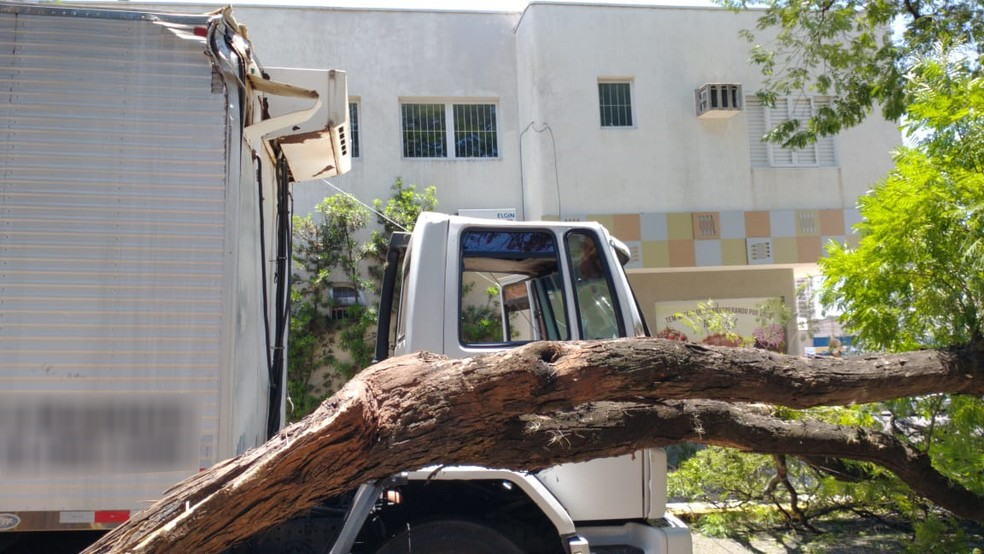 Segundo o Corpo de Bombeiros, o caminhão enroscou na árvore — Foto: Fábio Cristovam/Cedida