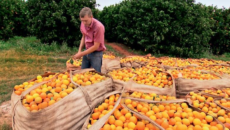 Produtor na colheita de laranja em Itapeva (SP) (Foto: Reprodução/Programa Globo Rural)