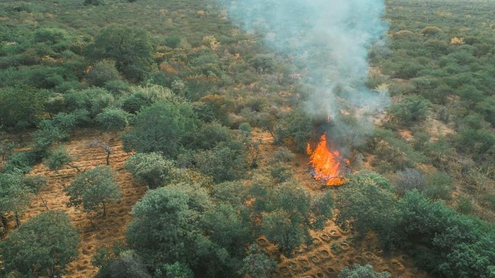 Operação incinera plantação de maconha é incinerada no Sertão de PE — Foto: Divulgação/ PRF