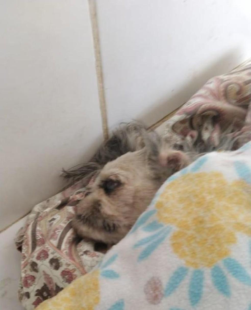 Lilica conseguiu proteger a dona do ataque de um pitbull, mas morreu durante a recuperação depois de ter uma parada cardíaca em Bauru (SP) — Foto: Arquivo pessoal/ Thaynara Milano