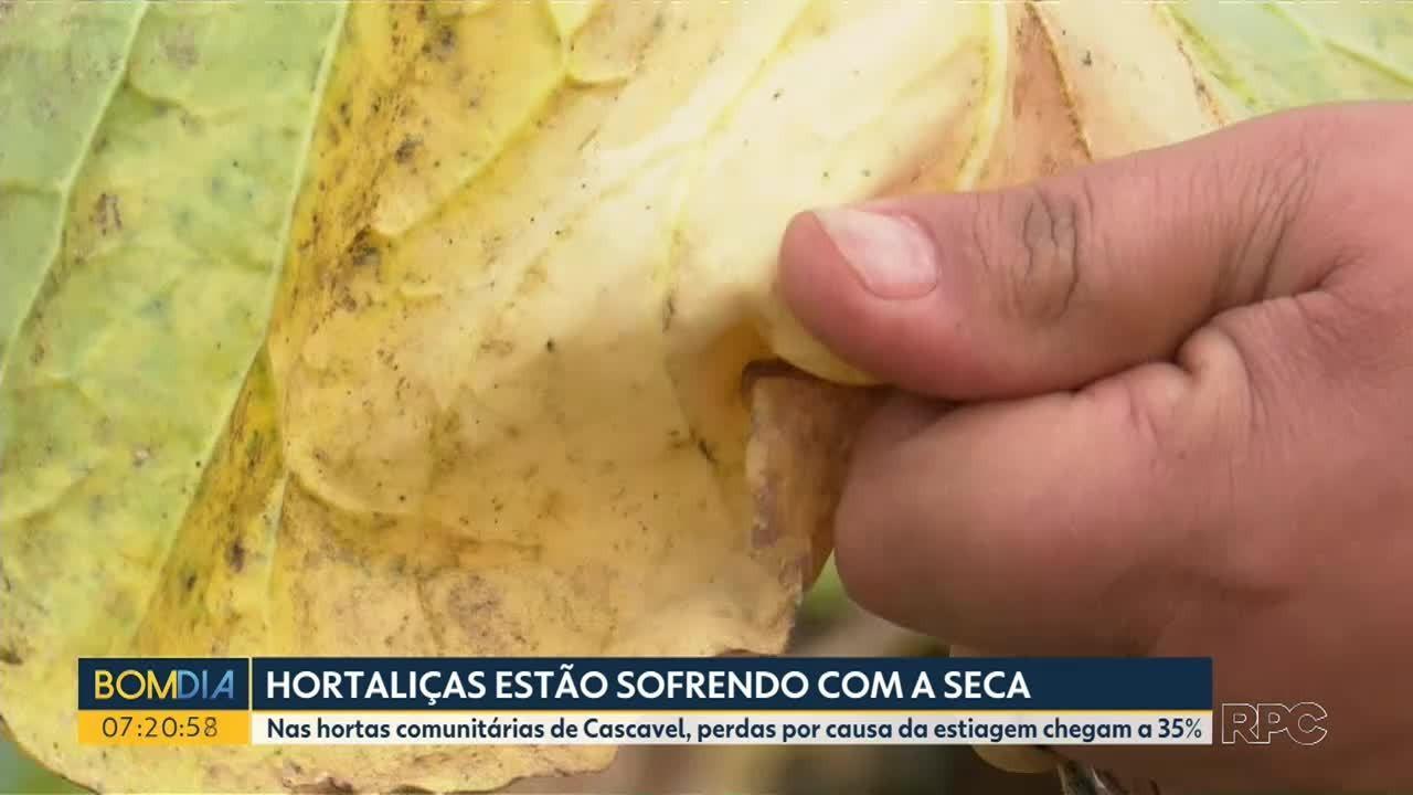 Perdas pela estiagem são de mais de 30% nas hortaliças na região Oeste