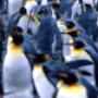 Proteção de Tela: Polar Wildlife