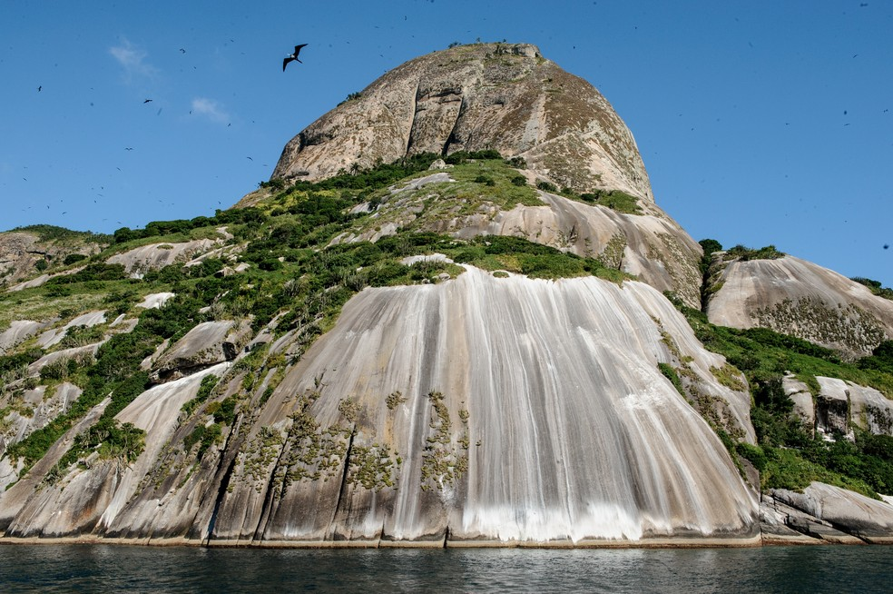 Vida silvestre no arquipélago dos Alcatrazes, no Litoral Norte de São Paulo: paraísos ameaçados  (Foto: Luciano Candisani)