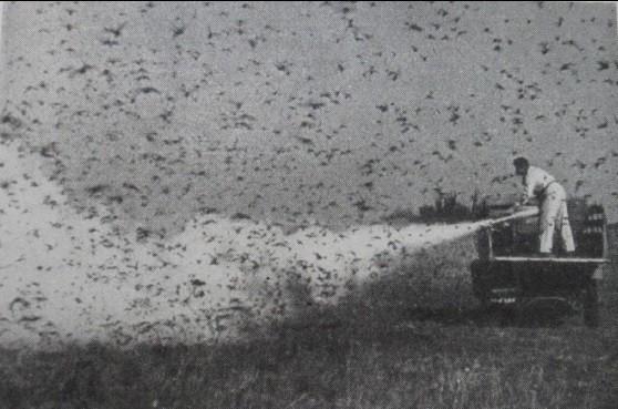 """Técnico agrícola faz a dispersão de químicos para combater nuvem de gafanhotos voadores em 1949 na cidade de Santa Fé (Foto: Tese de doutorado """"La Lucha Contra La Langosta: Relações Bissociais na América do Sul (Argentina, Uruguai e Brasil, 1896-1952)"""", de Valéria Dorneles Fernandes)"""