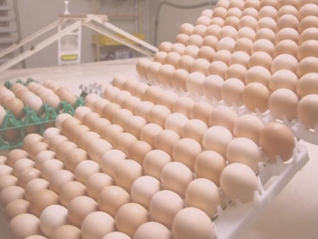 Granja - pintinhos - ovos - Granja Alvorada  (Foto: Divulgação)