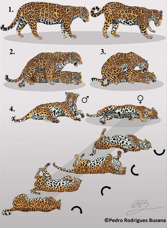 Ilustracoes Colaboram Para A Conservacao Da Vida Selvagem Vc No