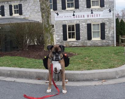 Vinícola recruta cachorro para entregar vinhos a clientes em isolamento na pandemia