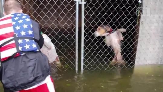 Fotógrafo narra resgate de cães presos em canil durante enchente provocada por furacão Florence