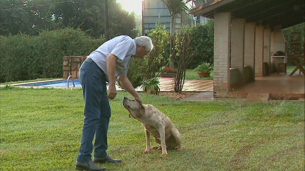 Cafeicultor de Ribeirão Corrente (SP) tem oito cachorros de porte grande para afastar ladrões — Foto: EPTV/Reprodução