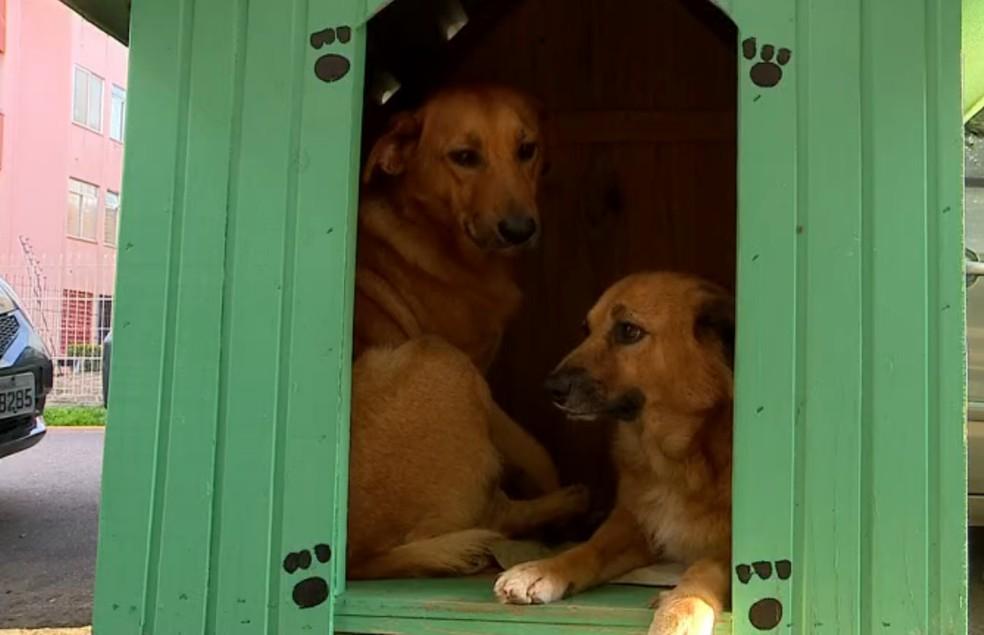 FIlha e Véia são cadelinhas famosas que se abrigam nas casinhas — Foto: Reprodução/RBS TV