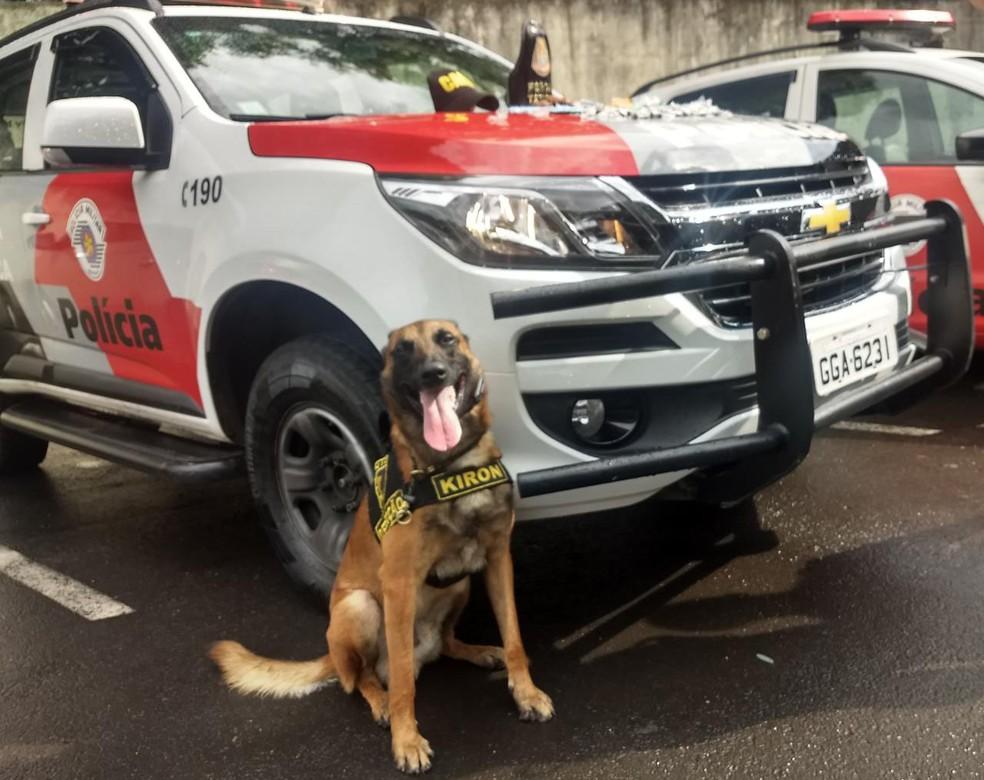 Cachorro da PM de Rio Claro encontrou várias porções de drogas em terreno — Foto: Força Tática da PM de Rio Claro
