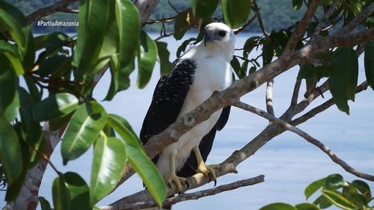 Foto: (Rede Amazônica)