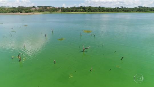 Microalgas deixam Rio Tietê verde, provocam mortandade de peixes e afastam turistas no noroeste paulista