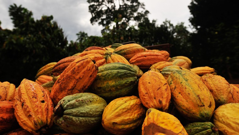 cacau (Foto: Globo Rural)