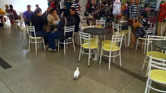 Sujeira causada por pombos incomoda moradores de Rio Preto