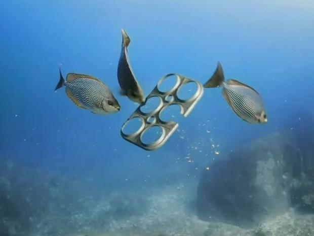 Peixes comem aro comestível produzido pela Saltwater Brewery (Foto: Reprodução/Youtube/We Believers)