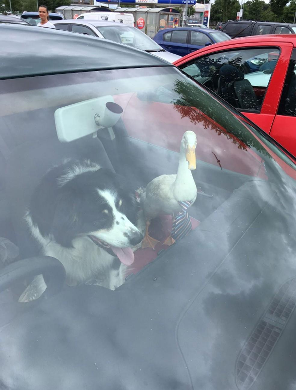 O pato Star e seu amigo cão (Foto: @DC_ARVSgt/Twitter)