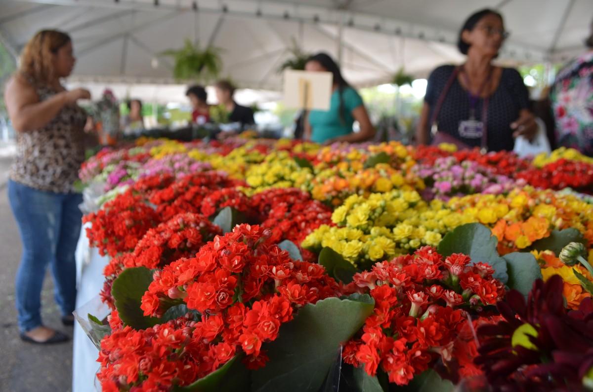 Festival de Flores de Holambra começa na sexta-feira (27) em Boa Vista