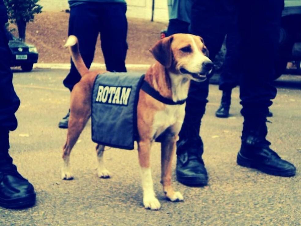 Cão atua com as equipes da Rotam há mais de 10 anos (Foto: Polícia Militar-MT/ Divulgação)