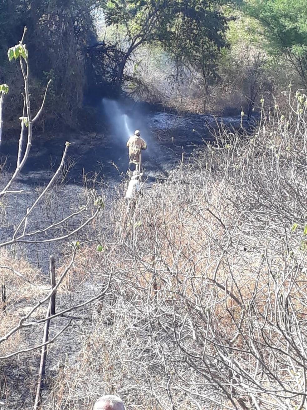 Cerca de dois hectares de vegetação foram atingidos — Foto: Divulgação/Corpo de Bombeiros/CE