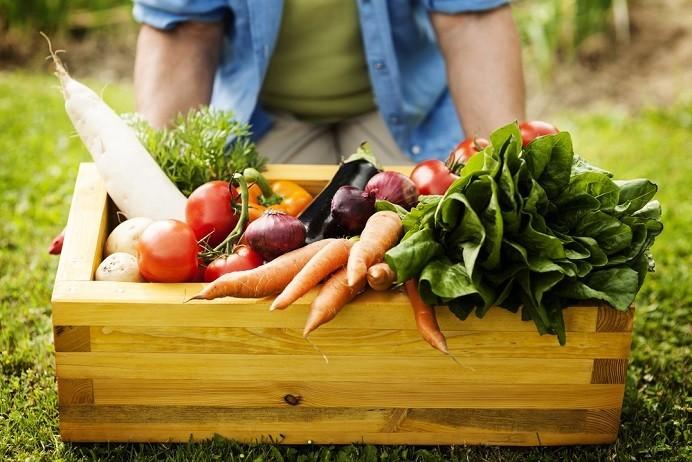 Cesta de alimentos orgânicos (Foto: Divulgação)
