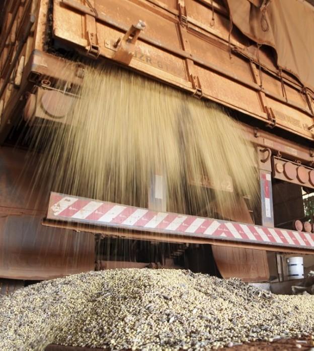 Preço da soja retoma trajetória de alta em outubro, diz Cepea