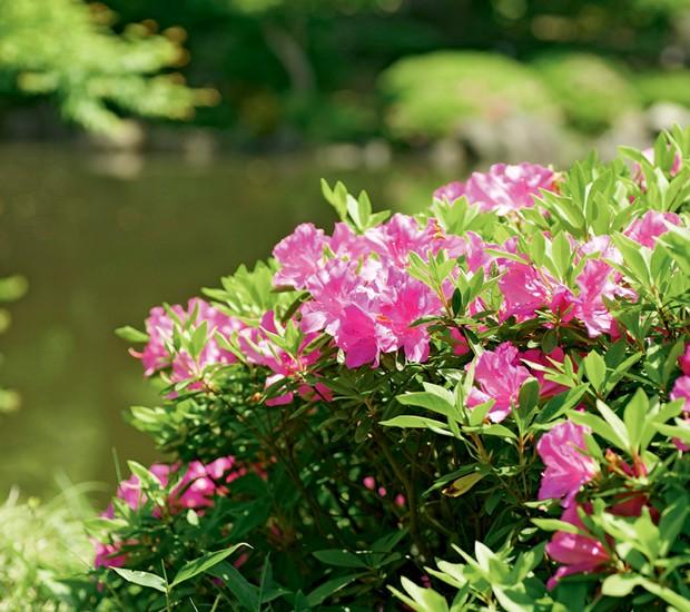 cerca-viva-azaleia (Foto: ThinkStock)