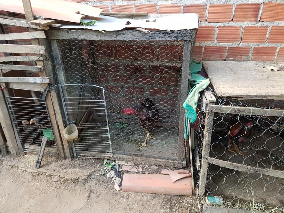 Vários animais foram apreendidos na operação (Foto: Divulgação/Polícia Civil)