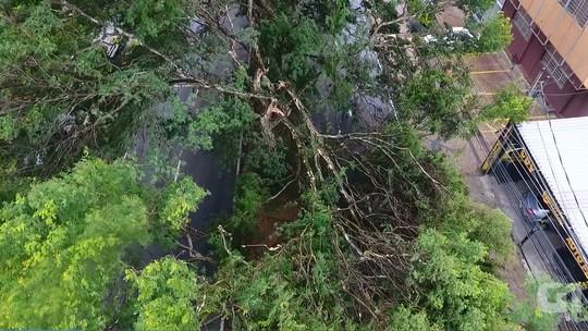 Duas árvores caem e trânsito fica interditado em avenida de Campinas