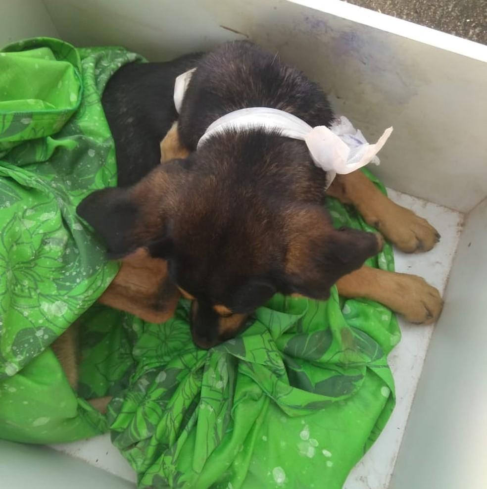 Cadela estava com uma ferida no pescoço e será disponibilizada para adoção em Jundiaí — Foto: Simone Regina dos Santos/Arquivo pessoal