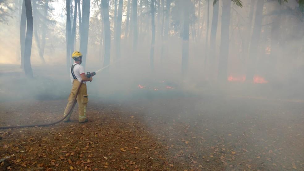 Bombeiro combate incêndio no Parque da Cidade, em Brasília — Foto: Corpo de Bombeiros/ Divulgação