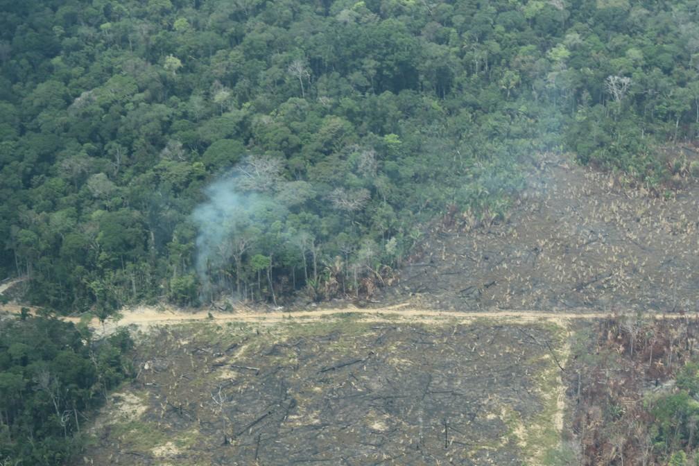 Área de desmatamento no sul do Amazonas e derrubada — Foto: Jonatas Boni/G1