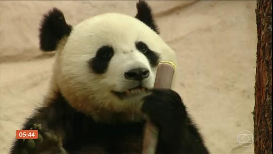 China presenteia a Rússia com ursos panda