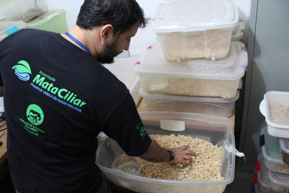 Equipe da Associação Mata Ciliar auxilia no cuidado com as serpentes — Foto: Foto: Banco de Imagens Associação Mata Ciliar