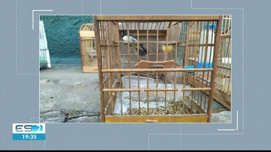 Pássaros em Cativeiro são resgatados, em Mimoso do Sul, no ES