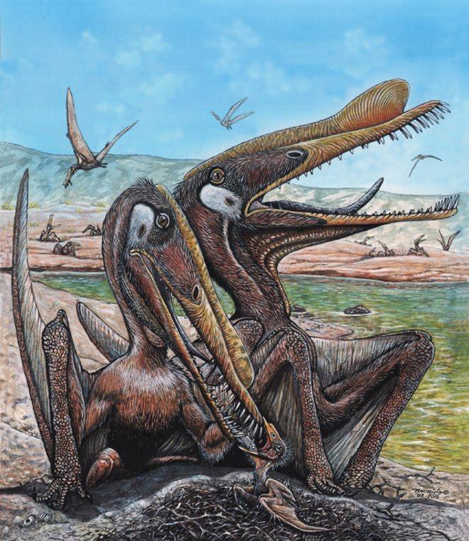 Os pterossauros - répteis voadores, parentes dos dinossauros - viveram há 80 milhões de anos (Foto: MAURILIO OLIVEIRA / MUSEU NACIONAL / Via BBC News Brasil)